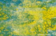U0041-24x15 Blue & Yellow On White